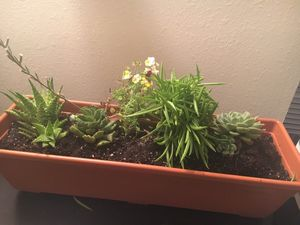 Beautiful healthy live succulent arrangement in a large rail planter for Sale in Cary, NC