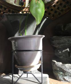 Monstera deliciosa, en maceta de cerámica y plant stand Thumbnail