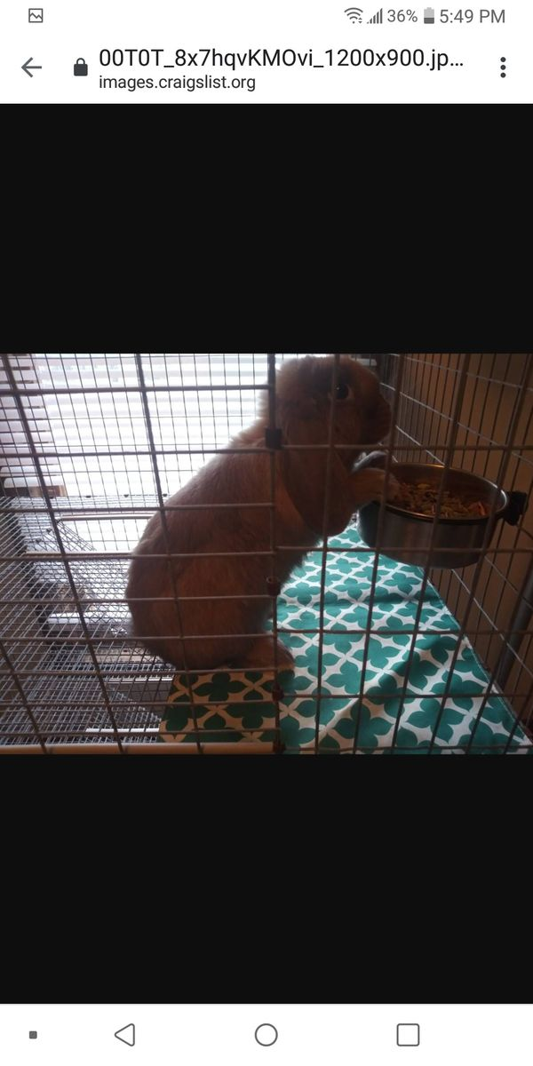 New and Used Pet supplies for Sale in Topeka, KS - OfferUp