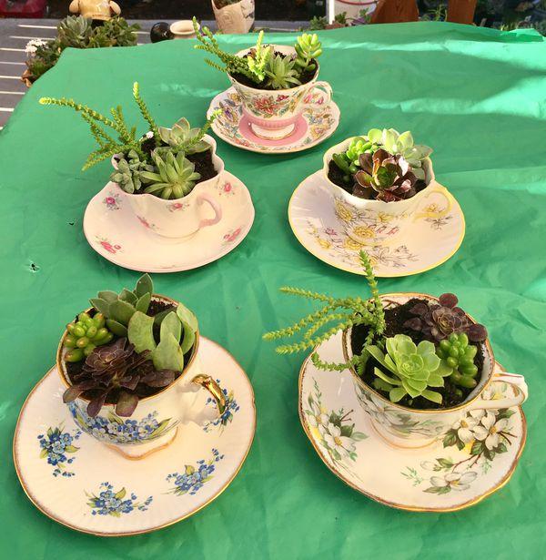 Cute Cup And Saucer Sets With Succulent Plant Arrangements