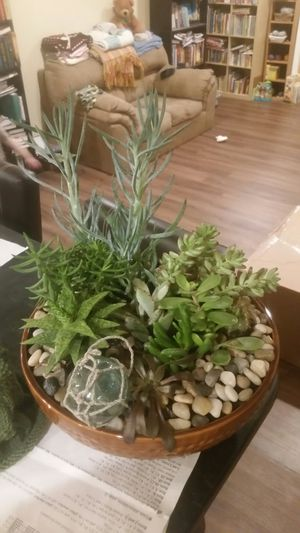 Hand made (by me!) Succulent plant arrangement! for Sale in OR, US