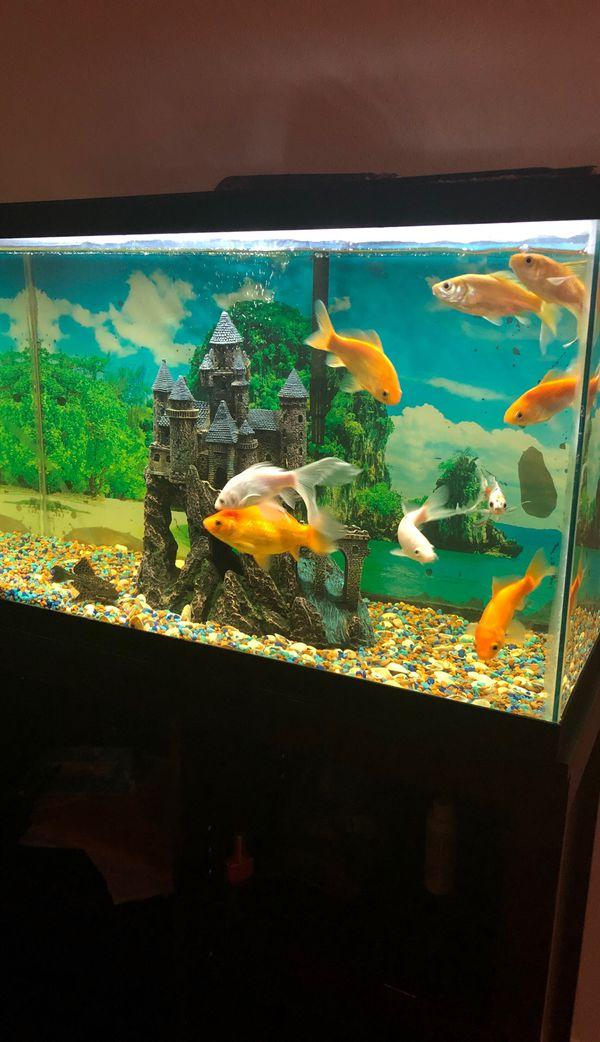 Aquarium and all stuff for Sale in San Antonio, TX - OfferUp