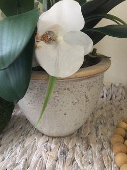 Orchid Decor With The Base Thumbnail