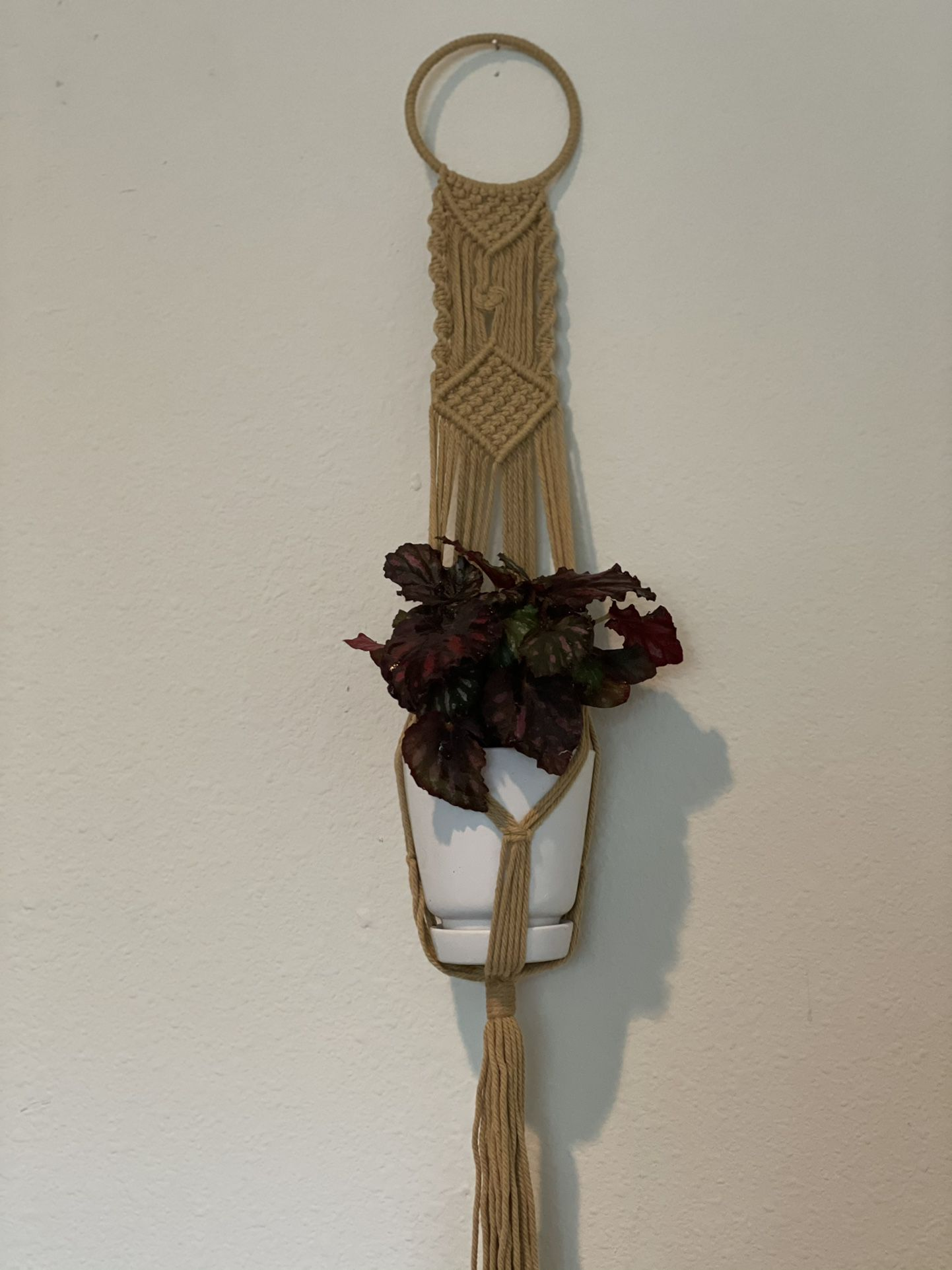Macrame Hanger With Plant
