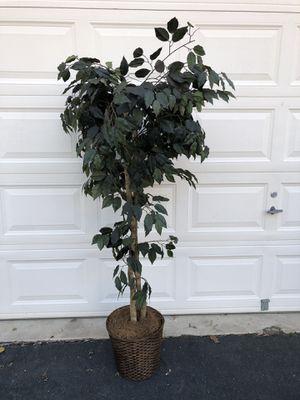 "68"" Artificial Tree for Sale in Manassas, VA"