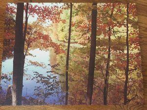Nature Scene Canvas Print for Sale in Washington, DC