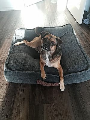 Dog bed 27×27 for Sale in San Diego, CA