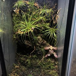 12x10x20 Custom Background Bioactice Terrarium Planted Airplant With Door Thumbnail