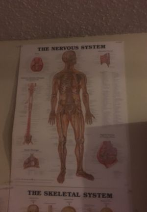 Medical posters for Sale in Scottsdale, AZ