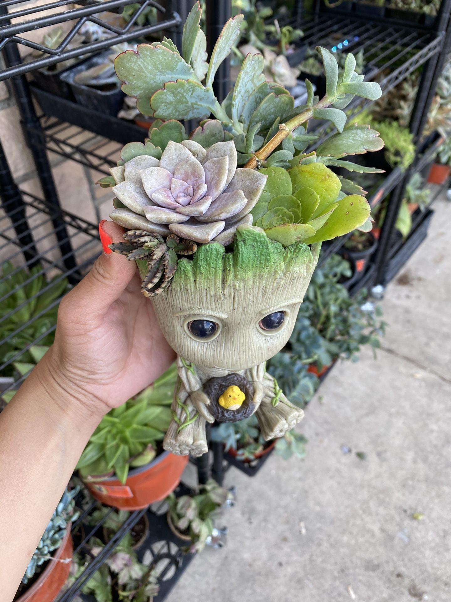 Baby Groot Succulent Arrangementmitgetsday Day Gift