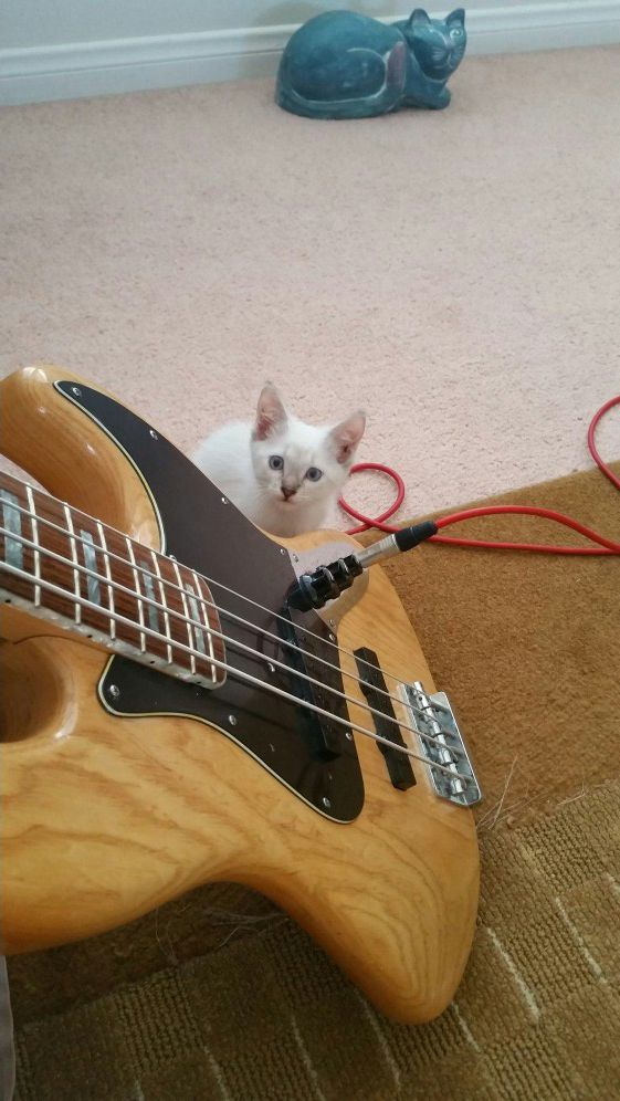 jazz bass warmoth early eighties low action dimarzio pick ups for Sale in  Irwindale, CA - OfferUp