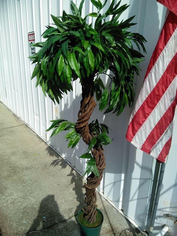 Ficus Tree (Home & Garden) in Douglasville, GA - OfferUp