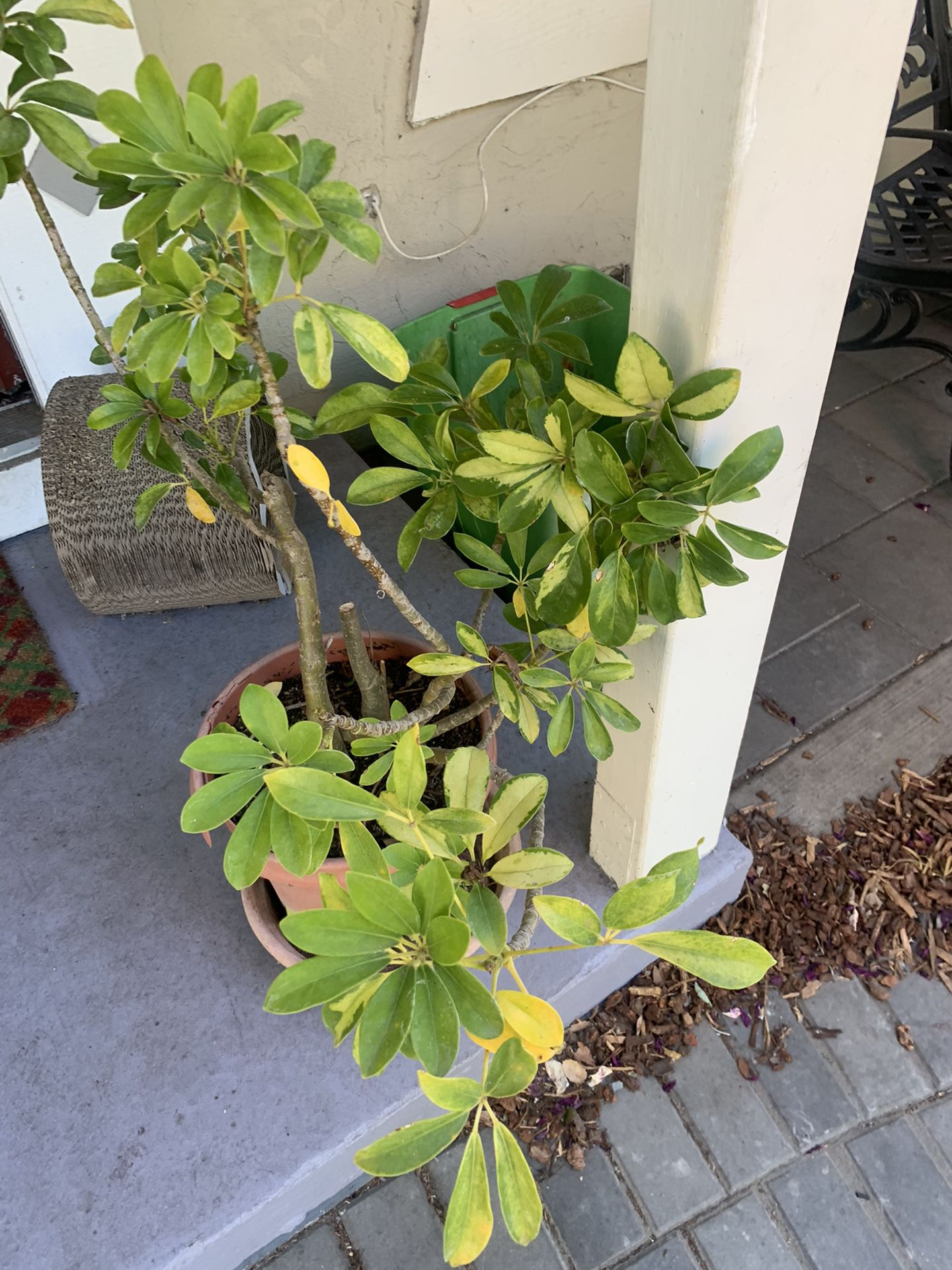 Plant For SALE