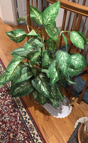 Plant artificial and others for Sale in Laytonsville, MD