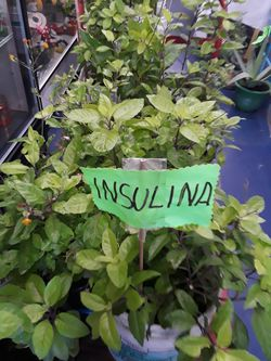 Insulina Thumbnail