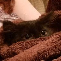 KittenSneezes