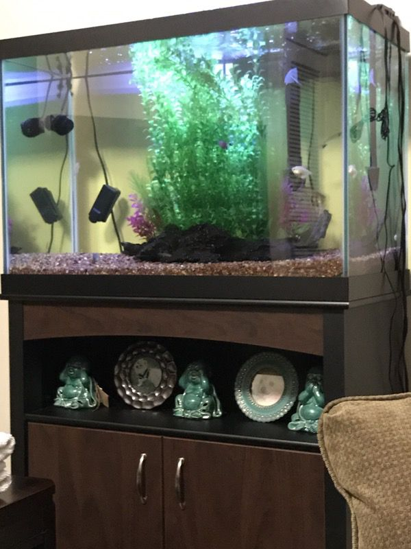 Aqueon 65 Gallon Aquarium - 1000+ Aquarium Ideas