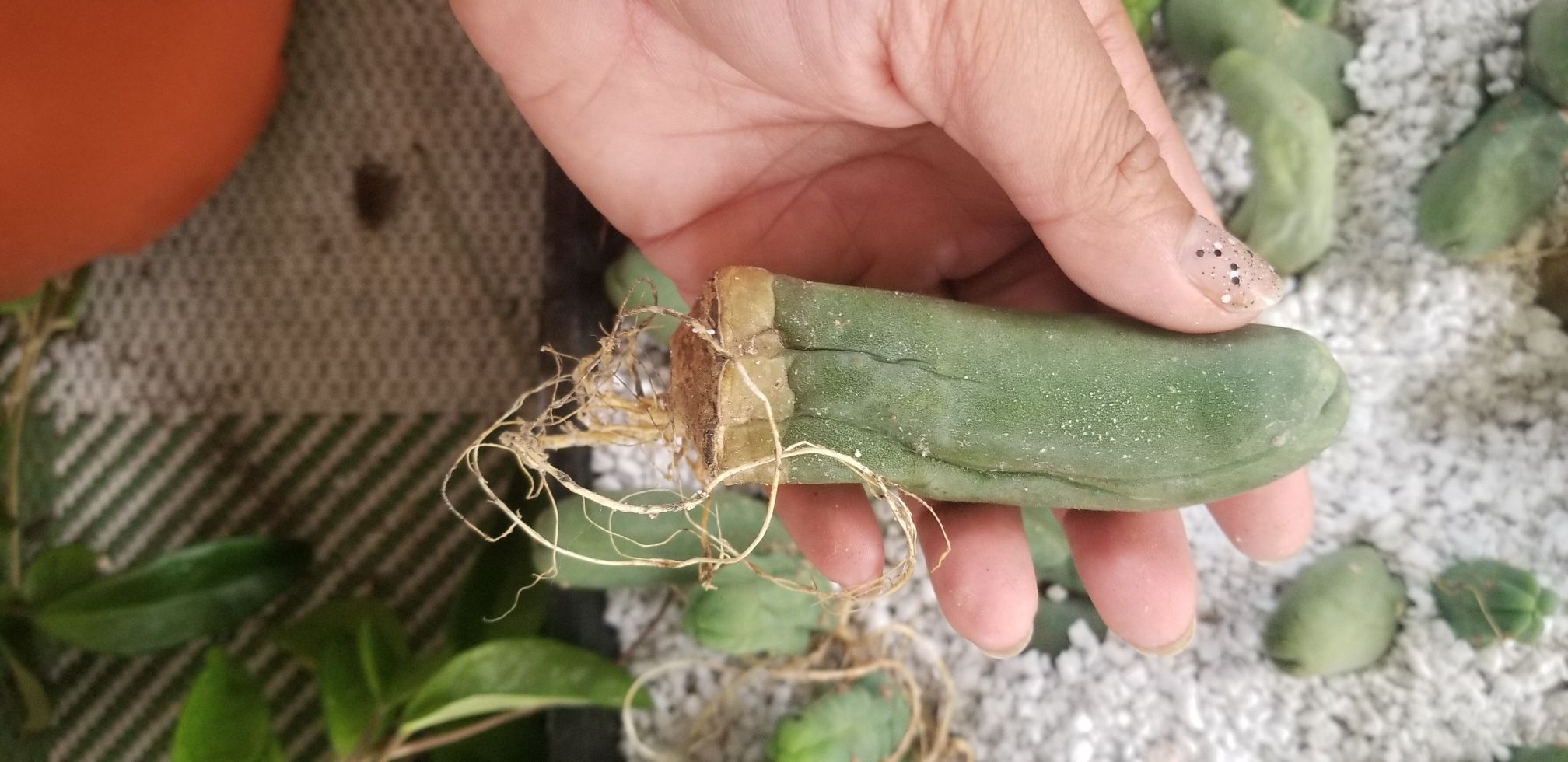 Pen is cactus