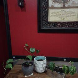 Pothos House Plants Thumbnail
