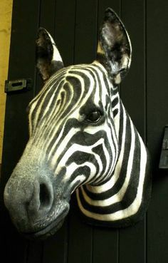 3D Zebra Wall Mount for Sale in St. Louis, MO