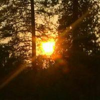 SunshinePatti