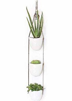 Hanging planter succulent cactus flower pots Thumbnail