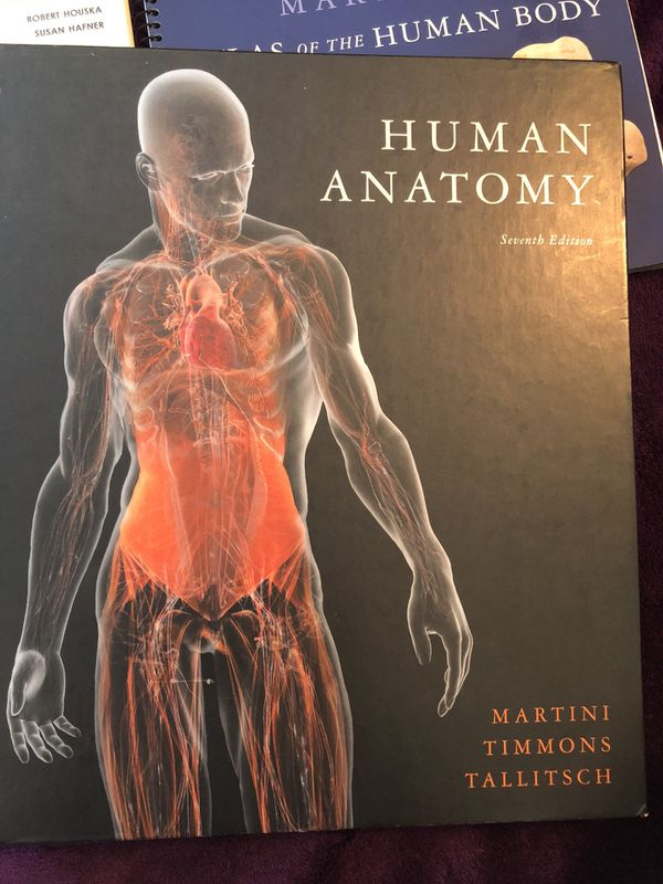 Human Anatomy 7th Edition By Martini Timmons Tallitsch Martinis