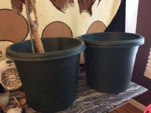 Ex large green potting plants for Sale in Berkeley, MO