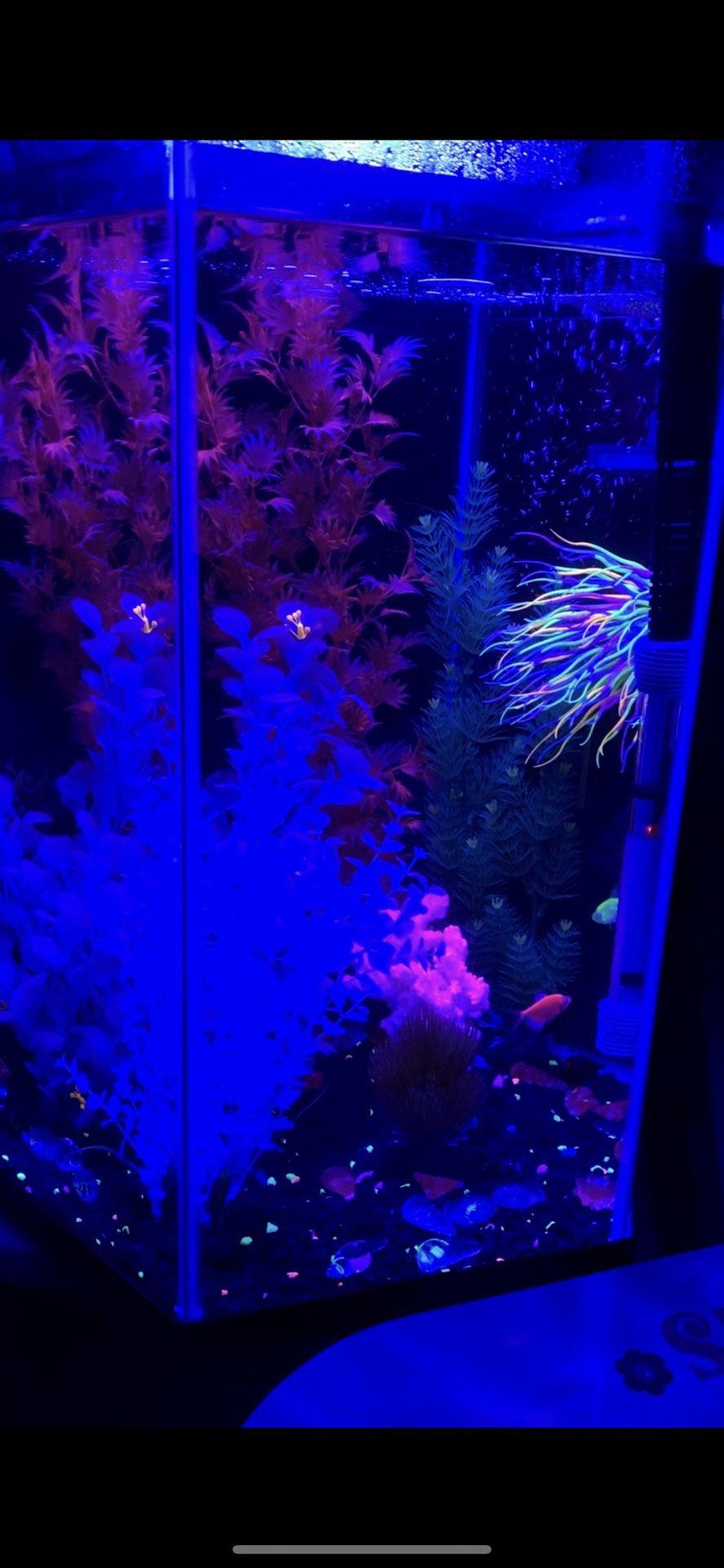 Used Top Fin Hexagon  Aquarium 20 Gallon