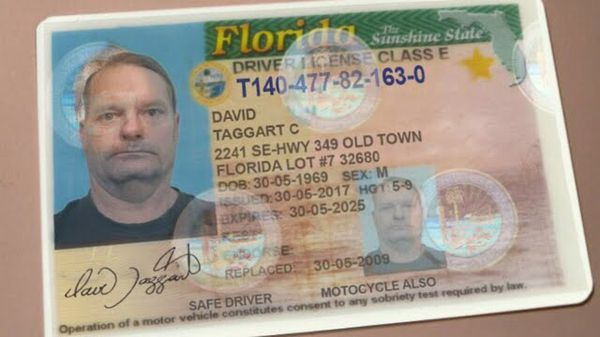 License Ids Florida Offerup For In Town drivers - And Old Fl Fake Buy Real Sale