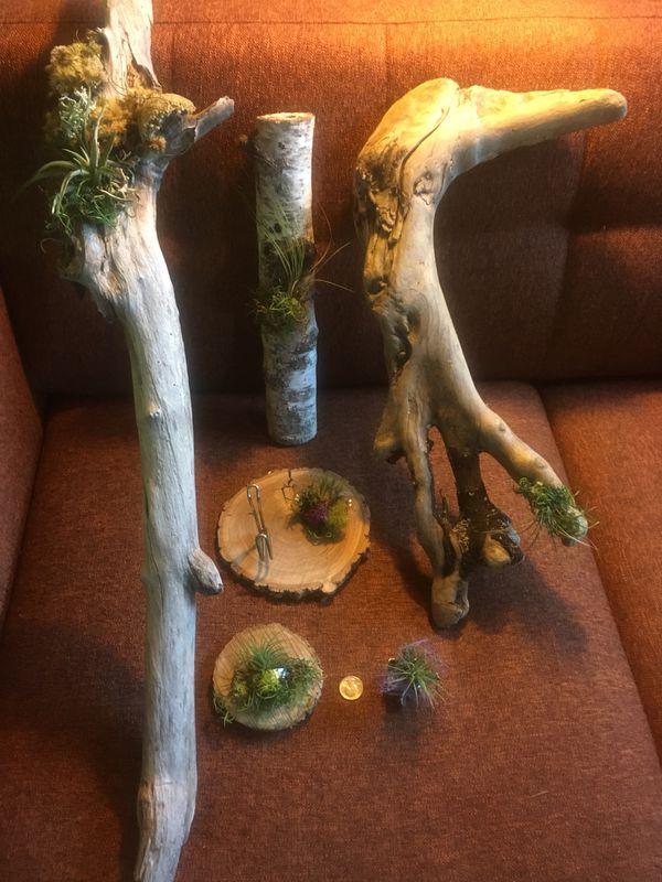 6 Air Plant Drift Wood Sculptures Home Garden In Seattle Wa Offerup