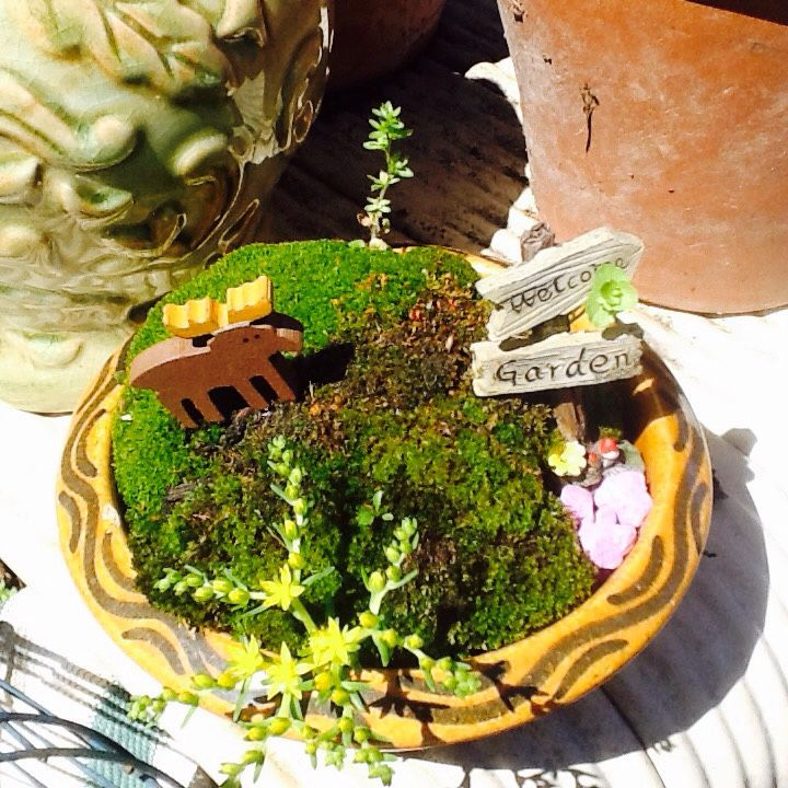 Miniature Fairly Garden...Live Moss And Plants