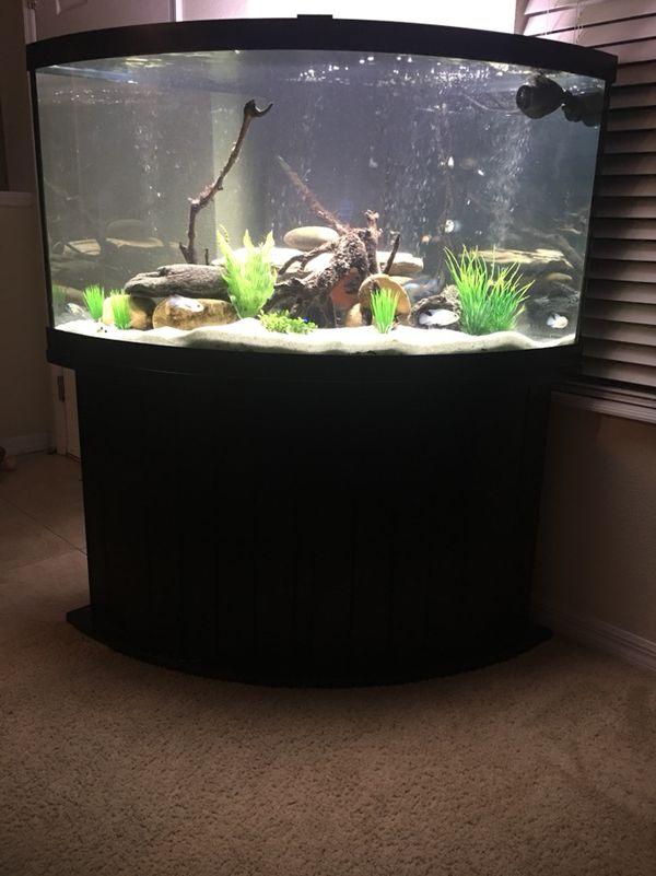 92 Gallon Bowfront Corner Fish Tank Aquarium