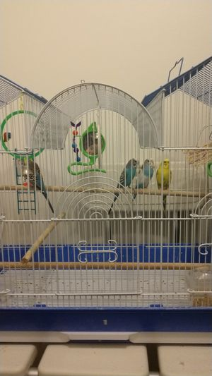 4 birds and a cage only $ 60 and it comes with there food for a year for Sale in Salt Lake City, UT