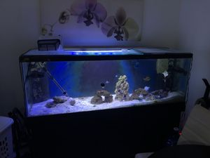 Fish tank for sell for Sale in Kissimmee, FL