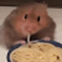 hamsterspaghett