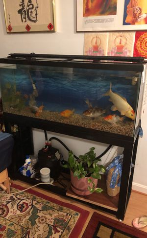 50 gallon fish tank with stand and filter for Sale in Rockville, MD