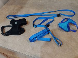Dog collar, leash, and harness for Sale in Apopka, FL