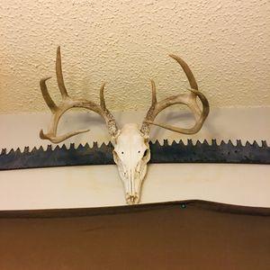 9 point deer skull for Sale in Austin, TX