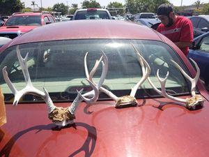 3 Deer Antlers. for Sale in San Diego, CA