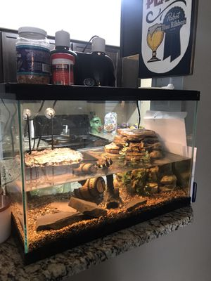 Turtle Tank Decorations For Sale  from images.offerup.com