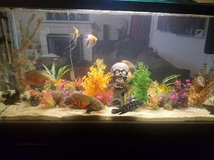 90 gallon fish tank for Sale in Los Angeles, CA