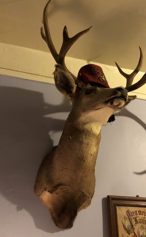 Jack tail antique deer for Sale in Seattle, WA