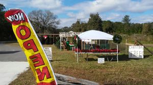 ***CHRISTMAS TREE'S*** for Sale in Lakeland, FL