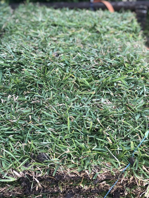St Augustine Sod Grass 1 50 If You Buy More Than 40 Pieces If Not 1 75 Each Fresh Daily For Sale