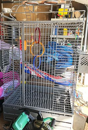 New and Used Bird cages for Sale in Arvada, CO - OfferUp