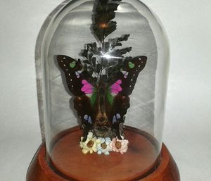 GRAPHIUM WEISKII Purple Yellowtail Butterfly in Glass Dome for Sale in Silver Spring, MD