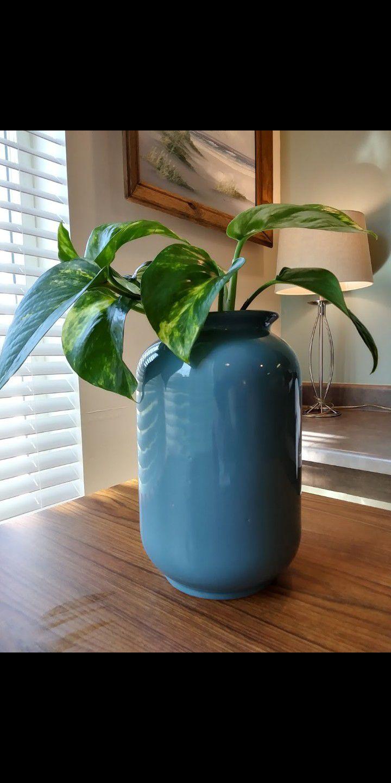 Pretty Vine Plant Air cleaning Blue (B)