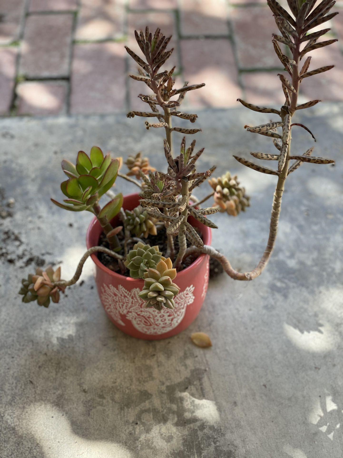 Succulents. Plants. Planter. Garden