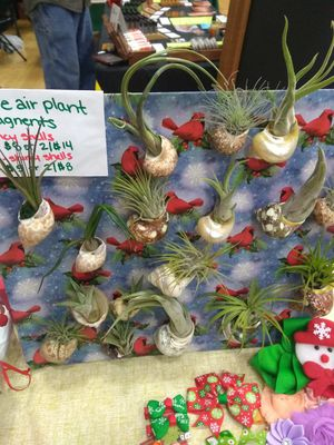 Unique beautiful hand-made live airplant seashell magnets, 18 of them for Sale in Olympia, WA